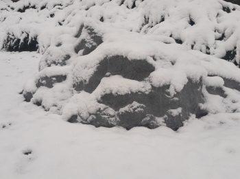 dekoratīvie vāki ziemā